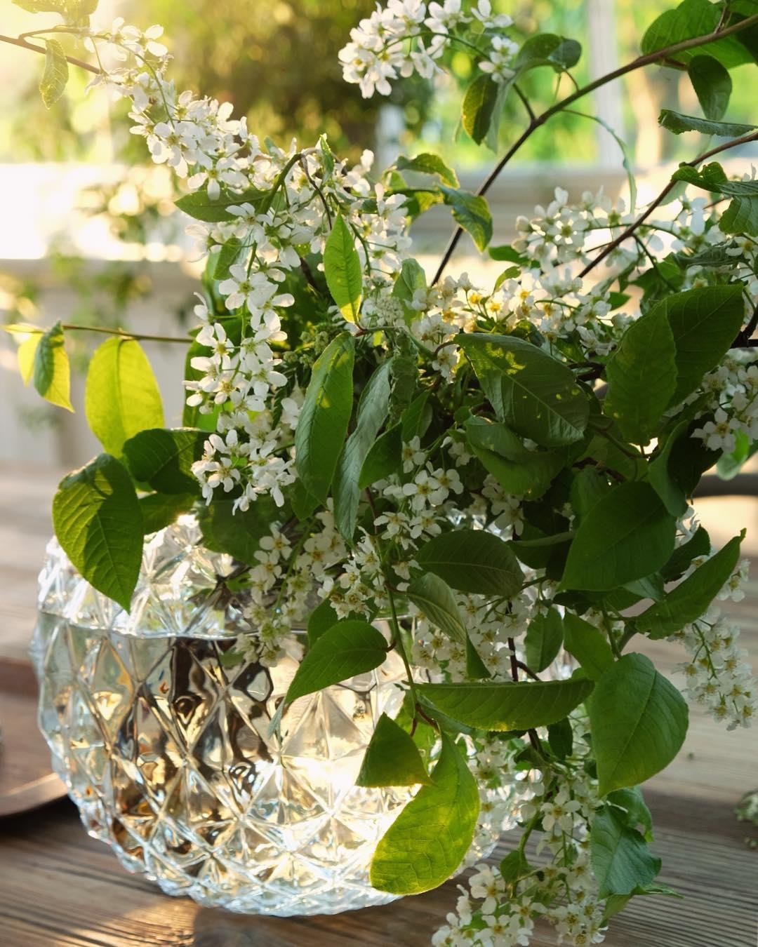 Att hggen blommar som finast och att syrenerna snart slrhellip